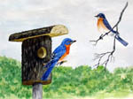 bluebirds, bluebird houses, bluebird painting