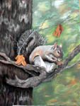 wildlife portraits, wildlife, squirrel, squirrel portrait, wildlife paintings, squirrels