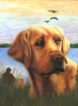 Pet portraits, pet art, dog art, pet photos into portraits