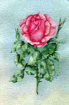 floral painting, floral portrai, flowers, roses, red roses, watercolors